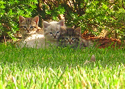14-year-old Aaron Adams photographed this endearing trio of  kittens.