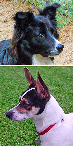 Andi Elliott captured the alert expressions of dogs, Emma Boulder (top) and Duchess, with her Canon Power Shot camera.