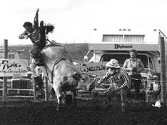 The rodeo provides the opportunity to photograph livestock in high action - completely different from animal portraiture.