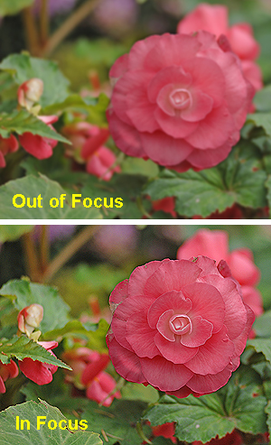 Although the image you see in your camera's viewing screen will appear to be out of focus, using your depth of field preview button will show that it will actually be in focus when the picture is taken.