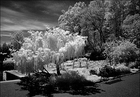 Photographer Paul W. Faust took this image illuminated by infrared light. Copyright Paul W. Faust.