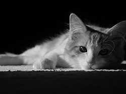 Photographer Kennard Yamata's cat