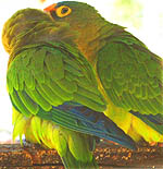 The Shelter provides safe haven for several parrots, macaws and other colorful, native Costa Rican birds.