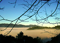 Morning fog in St. Helena, California. Photograph by Noelle Haftarczyk.