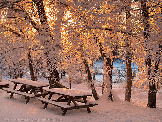 Warmed by the setting sun, these picnic tables are waiting for Spring.