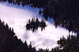 Photographed against the light, trees reflect their shadows on a calm surface for a pleasing aerial image.