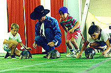 Even armadillo racing needs a fast ISO setting when the event is held indoors in low light